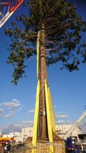 merikenpark.charistmastree