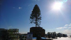 merikenpark-chiristmastree