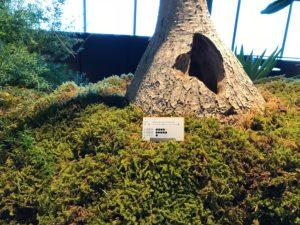 ディスプレイ(植物)